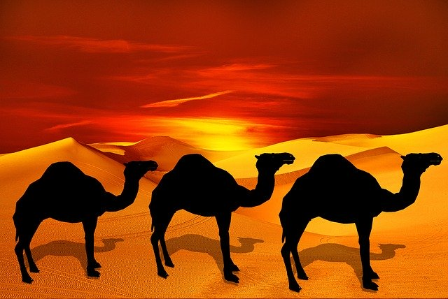 Free download Camel Desert Sand free illustration to be edited with GIMP online image editor