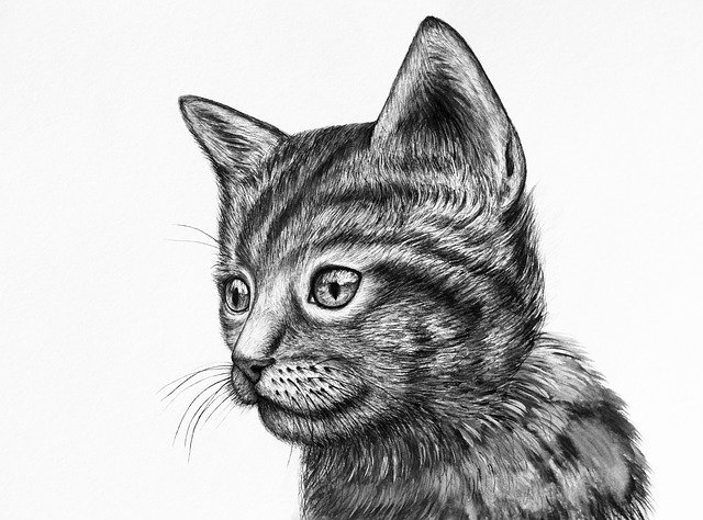 Free download Cute Kitten Drawing -  free illustration to be edited with GIMP online image editor