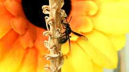 Free download Garden Insect Wasp free video to be edited with OpenShot online video editor