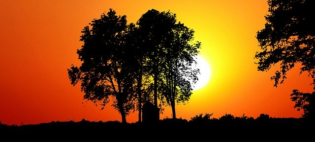 Template Photo Sunset Nature Trees -  for OffiDocs