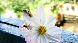 Free download Nature Insect Flower free video to be edited with OpenShot online video editor
