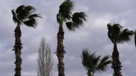 Free download Wind Palm Tree free video to be edited with OpenShot online video editor